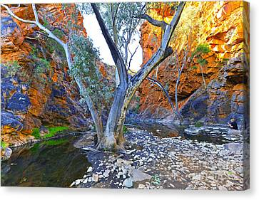Serpentine Gorge Canvas Print by Bill  Robinson