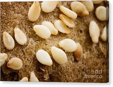 Sesame Seeds On Bread Crust Canvas Print by Mythja  Photography