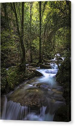 Canvas Print featuring the photograph Sesin Stream Near Caaveiro by Pablo Avanzini