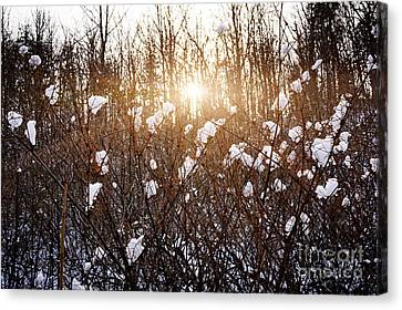 Setting Sun In Winter Forest Canvas Print