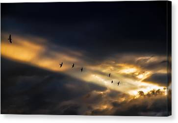 Seven Bird Vision Canvas Print by Bob Orsillo