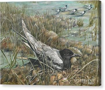 Seven Black Terns Canvas Print
