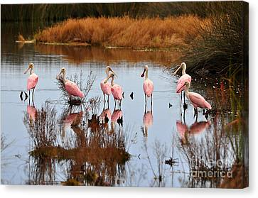 Seven Spoonbills Canvas Print by Al Powell Photography USA