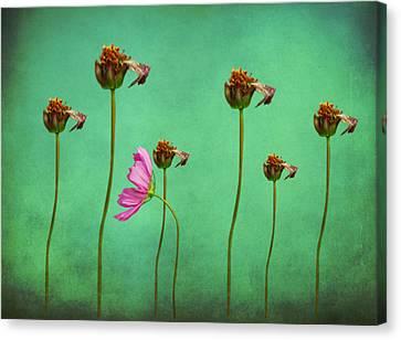 Seven Stems Canvas Print by David Dehner