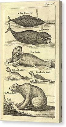 Several Creatures Canvas Print by British Library