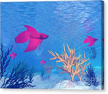 Several Red Betta Fish Swimming Canvas Print