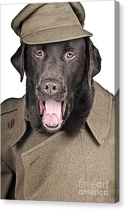 Sgt Dog Shouting His Orders Canvas Print by Justin Paget