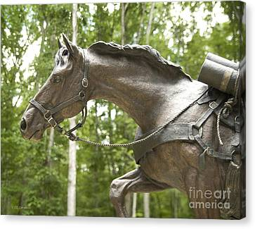 Canvas Print featuring the photograph Sgt Reckless by Carol Lynn Coronios