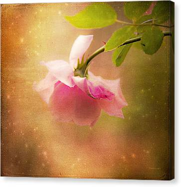 Shabby Chic Rose Print Canvas Print by Theresa Tahara