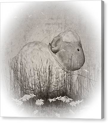 Shabby Sheep Canvas Print