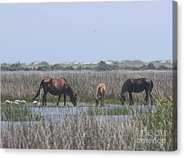 Shackleford Horses And Friends 2 Canvas Print