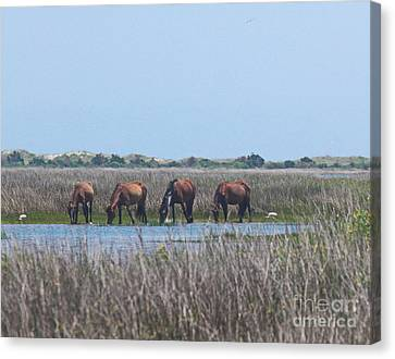 Shackleford Horses And Friends 3 Canvas Print by Cathy Lindsey