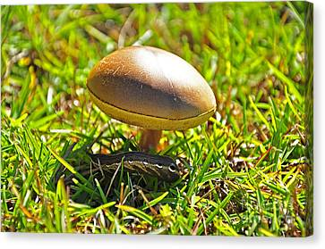Shade Of The Shroom Canvas Print by Al Powell Photography USA
