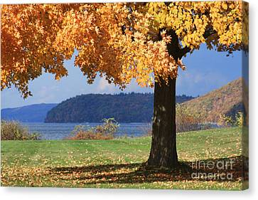 Shade Tree In Fall Canvas Print by Jayne Carney