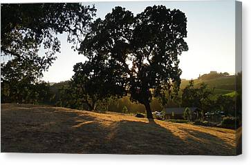 Shawn Marlow Canvas Print - Shade Tree  by Shawn Marlow