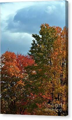 Canvas Print featuring the photograph Shaded by Judy Wolinsky