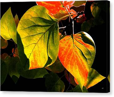 Shades And Shadows Canvas Print