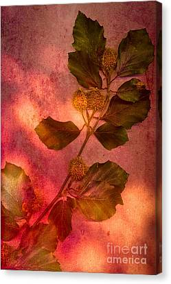 Shades Of Autumn Canvas Print by Jan Bickerton
