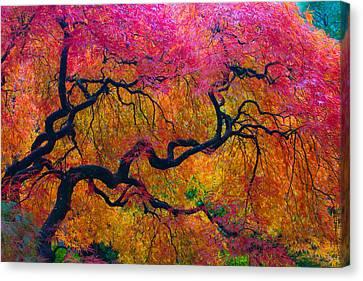 Shades Of Autumn Canvas Print by Patricia Babbitt