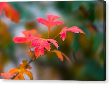 Shades Of Autumn - Red Leaves Canvas Print by Alexander Senin