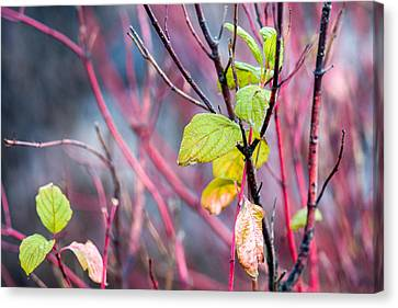 Shades Of Autumn - Reds And Greens Canvas Print by Alexander Senin