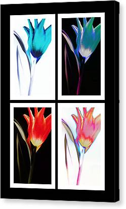 Canvas Print featuring the photograph Shades Of Colour  by Thomas Born