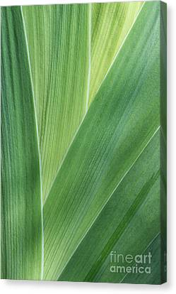 Canvas Print featuring the photograph Shades Of Green #2 by Judy Whitton