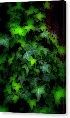 Shades Of Green Canvas Print by Steve Hurt