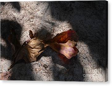 Canvas Print featuring the photograph Shading by Michelle Meenawong