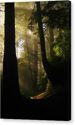 Pine Needles Canvas Print - Shadow Dreams by Jeff Swan