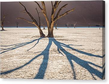 Shadow Of The Camel Thorn - Dead Vlei Photograph Canvas Print by Duane Miller