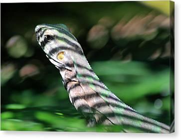 Blending Canvas Print - Shadow Stripes by Shane Bechler