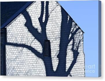 Shadow Tree Canvas Print by Bernard Jaubert