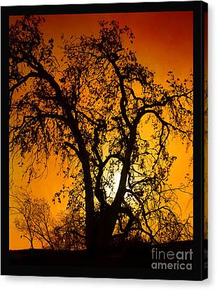 Shadowlands 11 Canvas Print by Bedros Awak