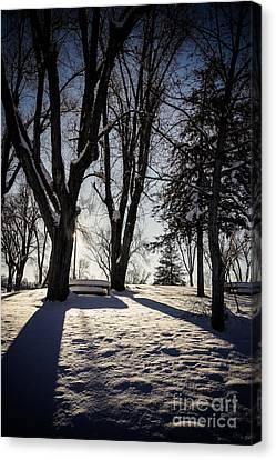 Winter Scene Canvas Print - Shadows And Light by Gloria Pasko
