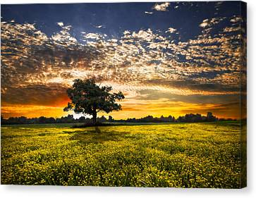 Shadows At Sunset Canvas Print by Debra and Dave Vanderlaan