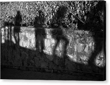 Shadows In The Vineyard Canvas Print