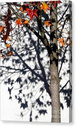Shadows Of Fall Canvas Print by CML Brown