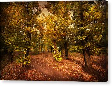 Shadows Of Forest Canvas Print by Svetlana Sewell