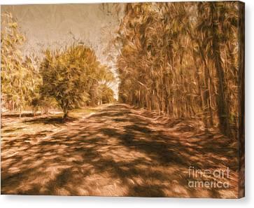 Shadows On Autumn Lane Canvas Print by Jorgo Photography - Wall Art Gallery