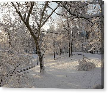 Shadows On Snow Canvas Print