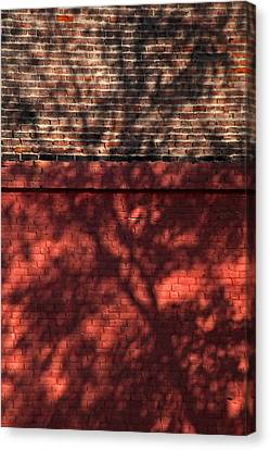 Shadows On The Wall Canvas Print by Karol Livote