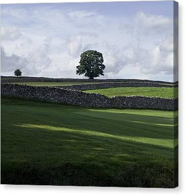 Canvas Print featuring the photograph Shadows by Sally Ross