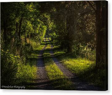 Shady Country Lane Canvas Print by Paul Herrmann