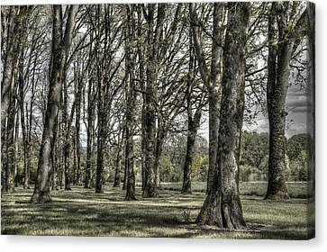 Shady Grove Canvas Print by Jean Noren