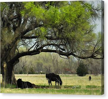 Shady Rest Canvas Print
