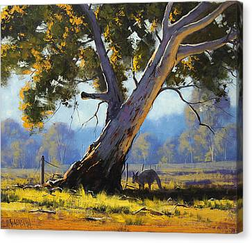Eucalyptus Canvas Print - Shady Tree by Graham Gercken