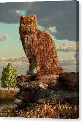 Shaggy Cat Canvas Print by Daniel Eskridge