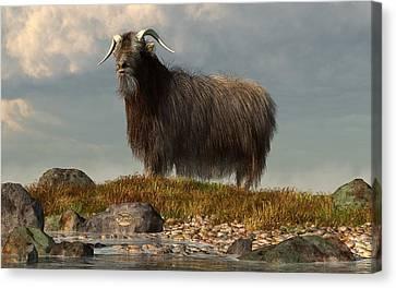 Shaggy Goat Canvas Print by Daniel Eskridge