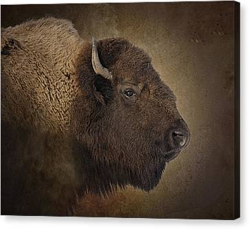 Shaggy One Canvas Print by Ron  McGinnis